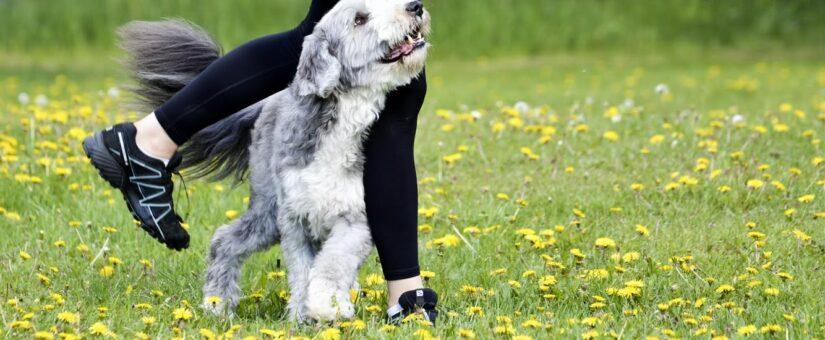 Prova-på-kurs i fem hundsporter (pågår)